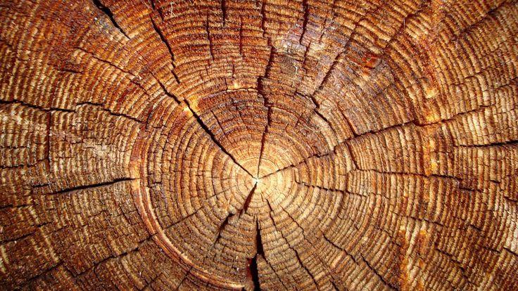 In un contesto che dal 2010 a oggi ha visto il crollo degli investimenti complessivi nell'industria delle costruzioni,l'edilizia in legno ha registrato un trend in controtendenza, con una crescita costante. Aspetto che conferma l'avvenuto cambiamento di mentalità nei confronti di...