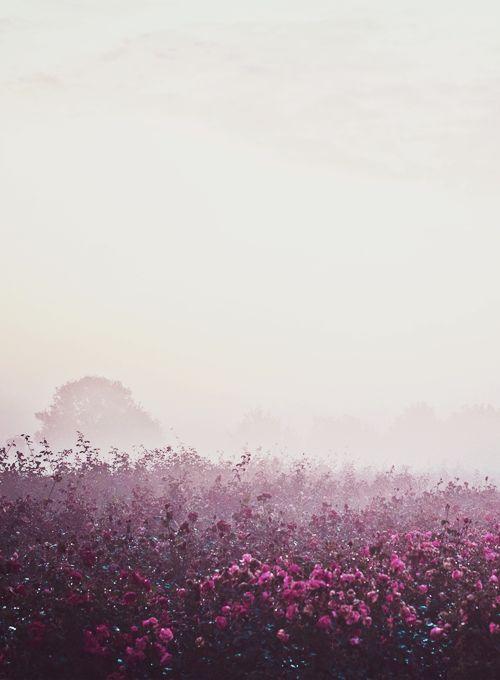 A beautiful field.