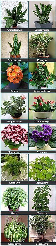 КОМНАТНЫЕ РАСТЕНИЯ ФОТО И НАЗВАНИЯ | Неприхотливые цветущие растения с описанием,фото и названием  для интерьера помещения