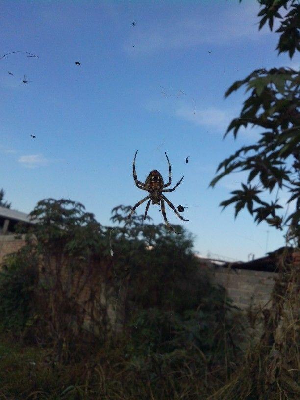 Spider!!