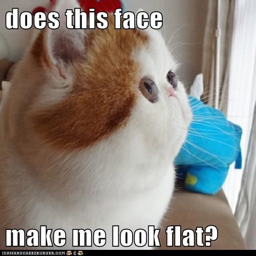 why are lolcats so flippin' funny?Cat Face, Real Life, Funny Animal Pictures, Funny Pictures, Fat Cat, Big Eye, Kitty, Flats Face, Funny Memes