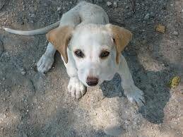 #prurit du #chien, article du #blog de zoomalia.com, votre #animalerieenligne http://www.zoomalia.com/blog/article/demangeaisons-chiens.html