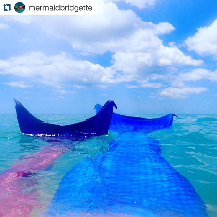 #Repost @mermaidbridgette with @repostapp. ・・・ Greetings from my office! Sarah thoroughly enjoyed her Mermaid Day! The weather was perfect and we decided to rest on the sandbar & float like little otters for a while  #mermaid #sarasota_florida #mermazing #friends #manifest #otter #mermaidlife #mermaidbridgette #venicebeach #venicefl #sarasota #sarasota_florida #mermaidsofinstagram #manatee #mermaids #mermaidsisters #mermaidsarereal #mermaidmonday #mermaidtherapy #saltlife #siestakey #mag