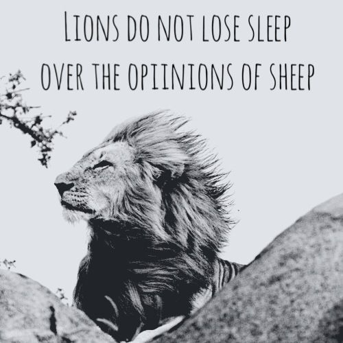 Lion Sheep Quote: Lions Do Not Lose Sleep Over The Opinions Of Sheep