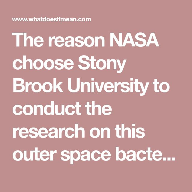 The reason NASA choose Stony Brook University to conduct the research on this outer space bacteria, this report explains, was due to its close location (50 miles/80 kilometers) to the Plum Island Animal Disease Center—which is one of just a handful of Biosafety Level 4 (BSL-4) laboratories in the world able to handle the world's most dangerous bacteria and viruses—and was where animal testing was done on this outer space bacteria under the supervision of primatologist Patricia Wright…