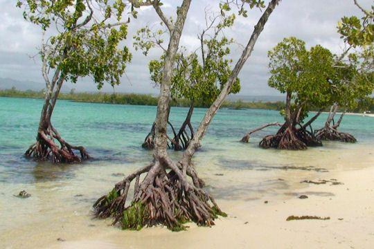 Avec ses plages d'aquarel et son atmosphère sereine, Maurice est l'île préférée des Français. Promenade sur ces îlots hors du temps .arbustes tropicaux