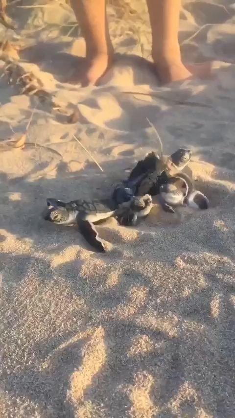 Bébé Tortues de mer éclosant – Animaux dans le paradis de gentillesse – #Animaux #Bébé # …   – Katzen / Cat