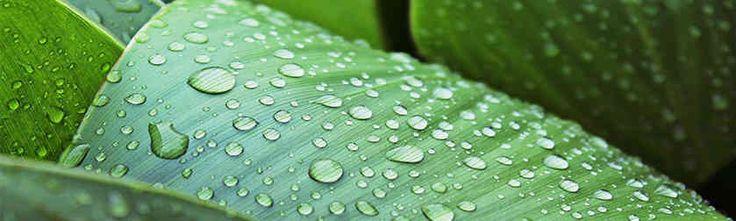 Blog > El #HuertoUrbano en Agosto. Tareas de mantenimiento para no perder las cosechas en las vacaciones.