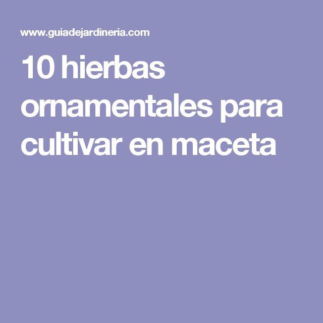 10 hierbas ornamentales para cultivar en maceta