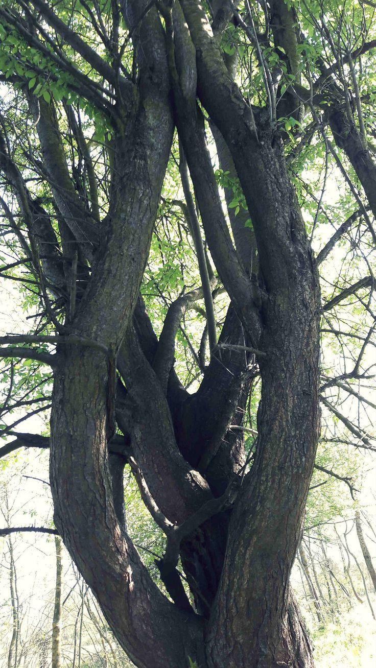 https://flic.kr/p/UeA1Uf | Curved Tree