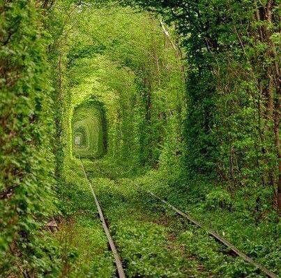 """Incredibile galleria ferroviaria C'è una bella pista ferroviaria che si trova a KLEVEN, Ucraina. La pista è coperta naturalmente da alberi verdi che formano un tunnel. Questa galleria ferroviaria è denominata come"""""""" il Tunnel dell'amore""""dalla gente locale."""