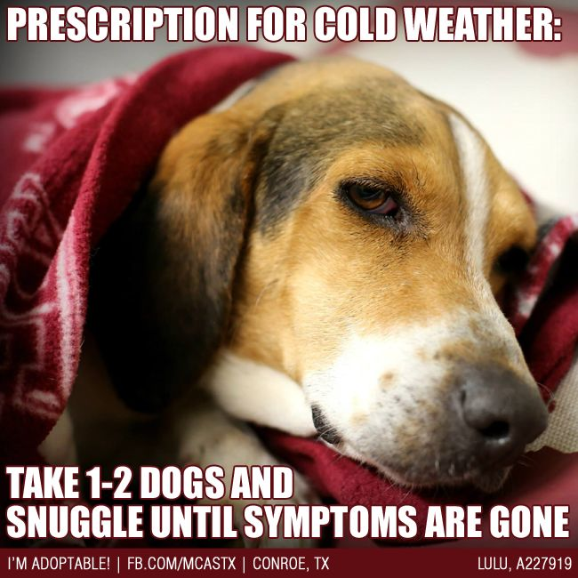 Cold weather survival tip! #love #dogs #mcaspets