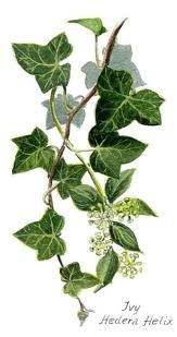 The ivy leaf was the emblem for Dalston County Secondary Grammar School for Girls in Hackney, London.