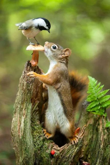 How lovely.  Squirrel and bird having a conversation over a mushroom.