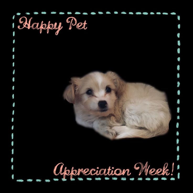 Happy Pet Appreciation Week! This is Elliot--one of the many pets we are thankful for here at Campus Commons Pet Hospital!