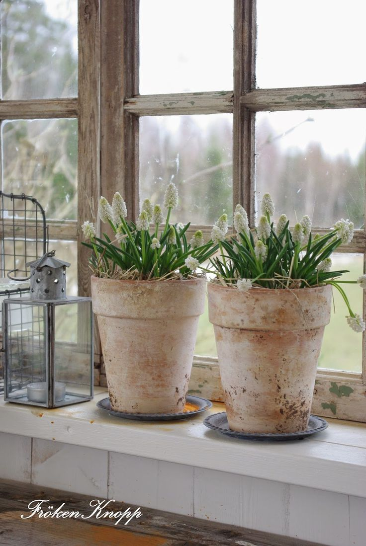 Fröken Knopp : Weathered Pots with Spring Blooms