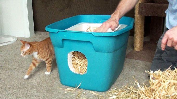 Diy Humane Cat Euthanasia