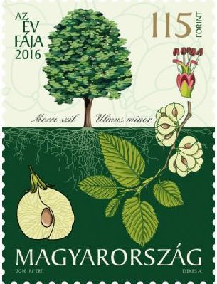 Hungary - 2016 Tree of the Year: The Field Elm (MNH)