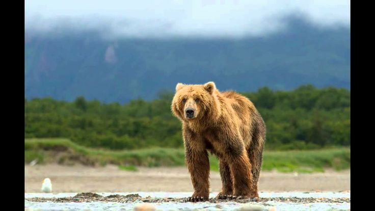 [Documentary]] Watch Bears Full Movie Streaming Online