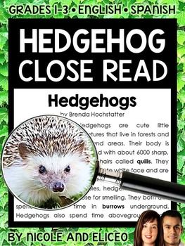 This downloads in English plus a FREE Spanish version. It has a variety of resources for your hedgehog lessons or unit. It includes a close reading guide, text code reference sheet, poster, vocabulary cards, non-fiction text and activity sheets. I made these hedgehog close reading activities to boost my students vocabulary development and deepen their comprehension as they learn to read with a purpose and pay more attention to details.