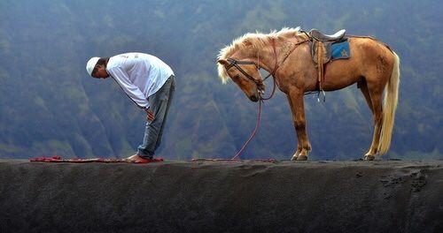 Lol!! #equestrian