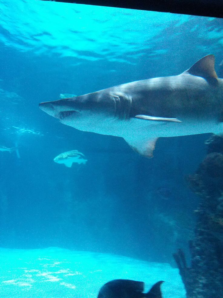 Coupons For Newport Aquarium Rock And Roll Marathon App