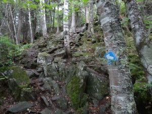 Hunt_Lake_Trail-300x225.jpg 300×225 pixels