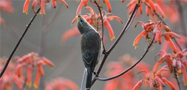 Bird List and 5 Tips for Bird Watching at Random Harvest Farm