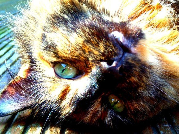 """Photo """"Tammy"""" by sarahtwyford"""