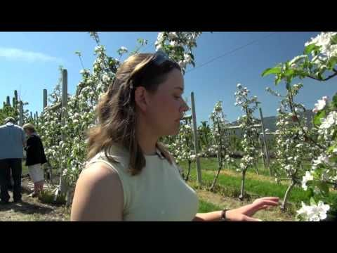 Tour an Ambrosia Apple Orchard! They sure know how to pick-em! #organicweek National Supporter 2014!