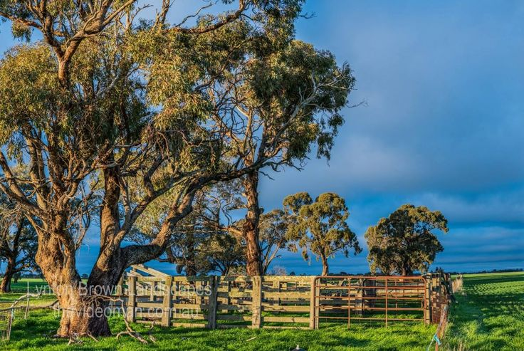 Cattle yards near Horsham