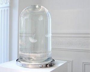 The Darwin Tank, an Aquarium for your Jellyfish