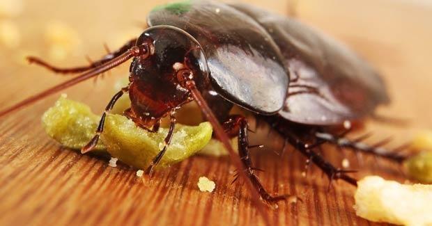 ¿Hart@ de que tu casa y jardín se llenen de cucarachas? Descubre las mejores recetas ecológicas, gracias a LA HUERTA DE IVAN, para decirles adiós para siempre.