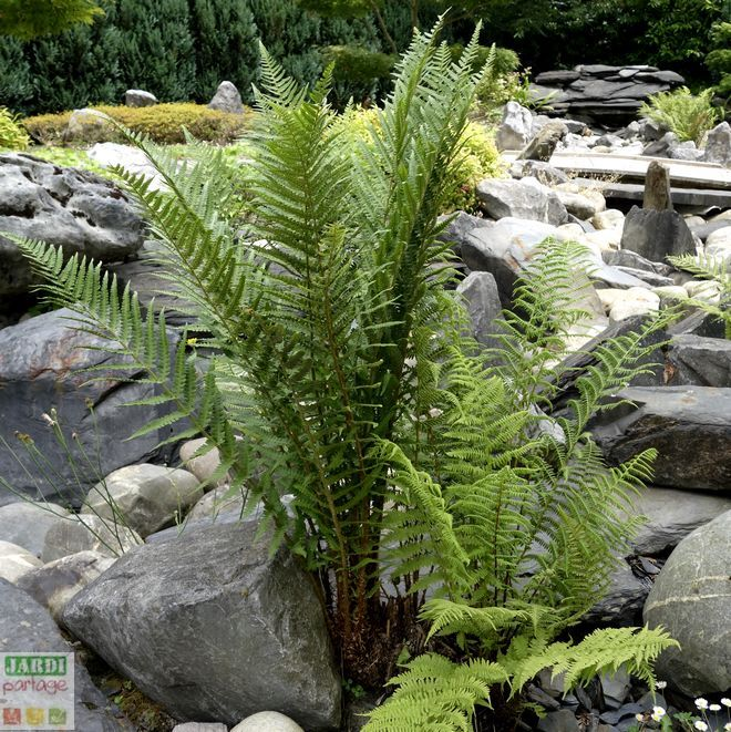 5363 best Le jardin se partage ! images on Pinterest - jardin japonais chez soi