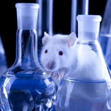 Was ist Ihnen das Leben dieser Maus wert? VON UWE JEAN HEUSER. Ein Experiment, das provoziert: Wirtschaftswissenschaftler zeigen im Labor, wie der Markt die Moral zerstört. DIE ZEIT :: 16.05.2013