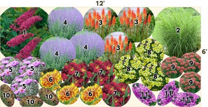 многолетники, подобранные для клумбы непрерывного цветения