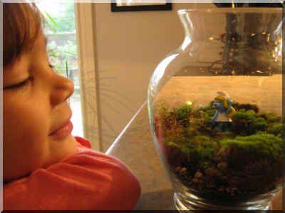 Le terrarium de plantes : de la réalisation à l'entretien