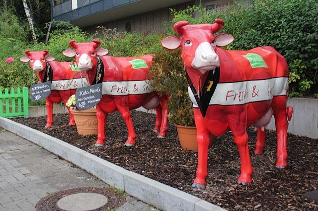 Greek cow family