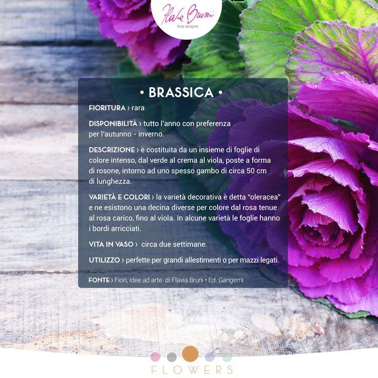 Oggi vi presentiamo la Brassica, della famiglia delle Brassicaceae e meglio conosciuta con il nome comune di Cavolo Ornamentale (da FIORI - Idee ad Arte)
