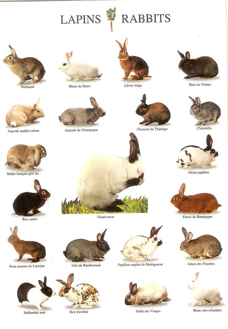 a chart of some rabbit breeds                                                                                                                                                                                 More