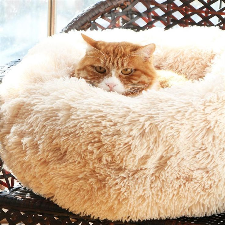 Marshmallow Cat Bed 【HOT Selling】 (With