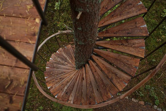 spiral stairs around tree trunk