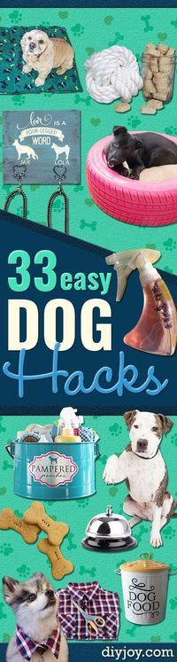 Best 25 cheap dog food ideas on pinterest puppy food homemade best 25 cheap dog food ideas on pinterest puppy food homemade homemade dog food and homemade doggie treats solutioingenieria Images