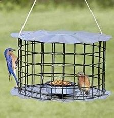 free bluebird house plans with video instruction one board plans eastern bluebird
