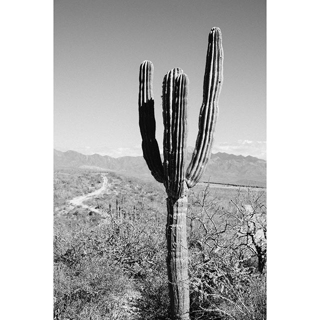The cactus to us represents effortless and organic sustainability, something we continue to strive towards each and every day (still working on that whole 'effortless' part) 📷 @d_peto