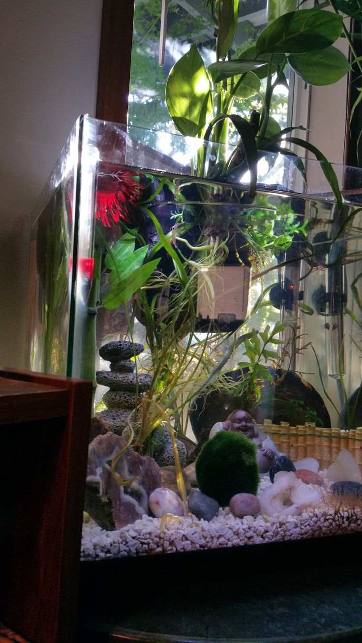 Betta Tank, Aquascaping, Aquariums, Fishing, Fish Tanks, Pisces