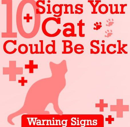 10-signs-your-cat-could-be-sick-warning-signs
