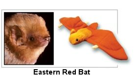 SUPPORT BAT CONSERVATION INTERNATIONAL.  ADOPT A BAT & GET BAT TOY, ADOPTION CERTIFICATE & COMPLETE SPECIES PROFILE OF BAT OF YOUR CHOICE. CHECK IT OUT!