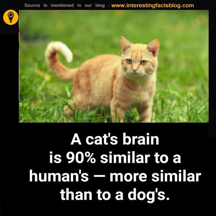 Human Brain Vs Cat Brain Vs Dog Brain Interesting Facts