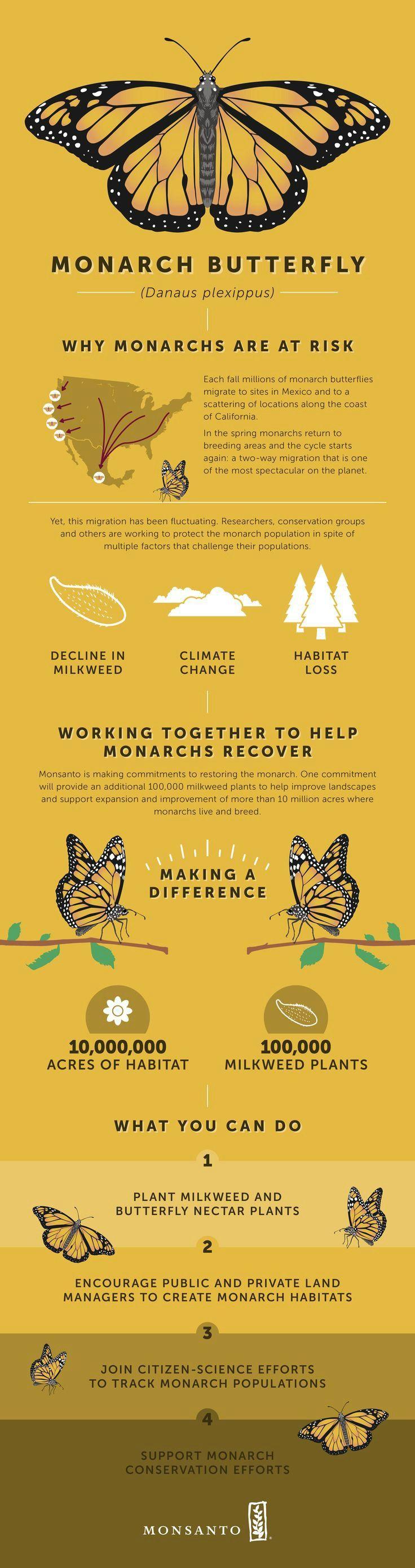 Find out why Monarch butterflies are at risk and what we at #Monsanto are doing to help them thrive. Find out more here!